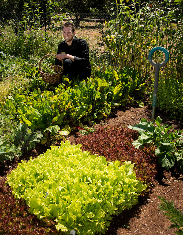Chef Jeremy at Down the Road Farms at Peacefield Orchard Organic Salad Greens Farm Fresh