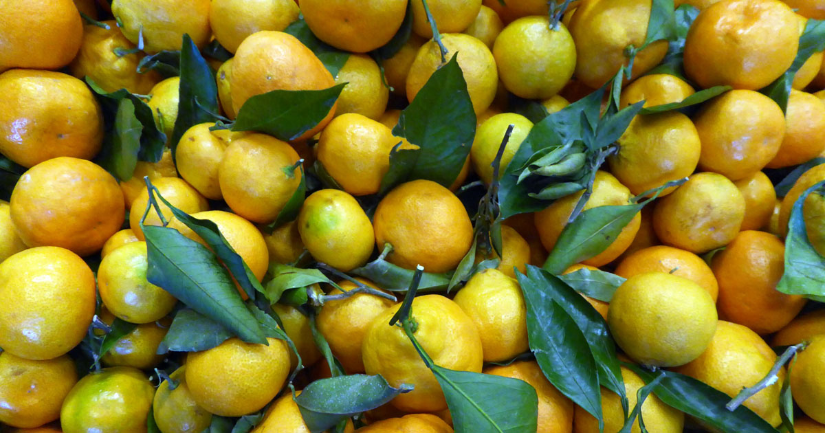 Lemons for making lemonade.